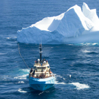 Supply vessel Chignecto towing an iceberg out of the path of Husky's drilling operations